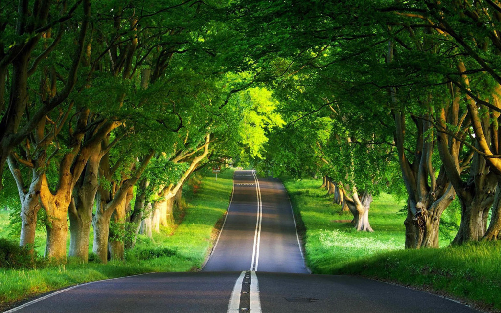 8771635-beautiful-nature-road-7835